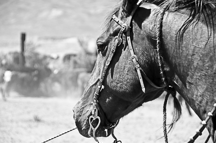 Jaquima to Freno:  The History & Practice of Traditional Vaquero Horsemanship